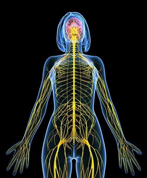 Картинки девушка нервная система